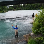 Salmon Fishing In The Kenai River