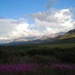 Denali Views 2