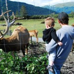 Logan And Tim With An Elk